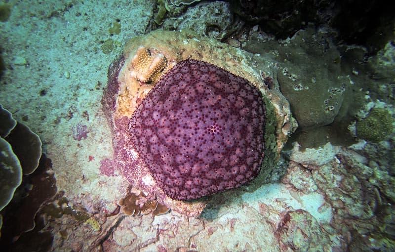 Thailand Diving Liveaboard - Thailand Dive Sites MV Giamani