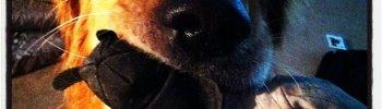 I love #Gnate!! -Archie. #savannah (Taken with instagram)