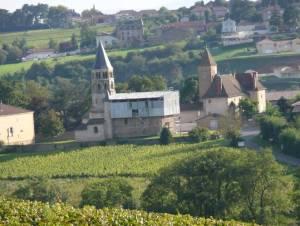 Dominique Cornin's vineyard in Chaintré