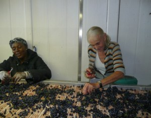Mme Leroy at the sorting table