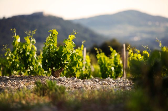 Bandol From Above: A Vineyard Tour with Robert De Salvo and Romain Bournaud