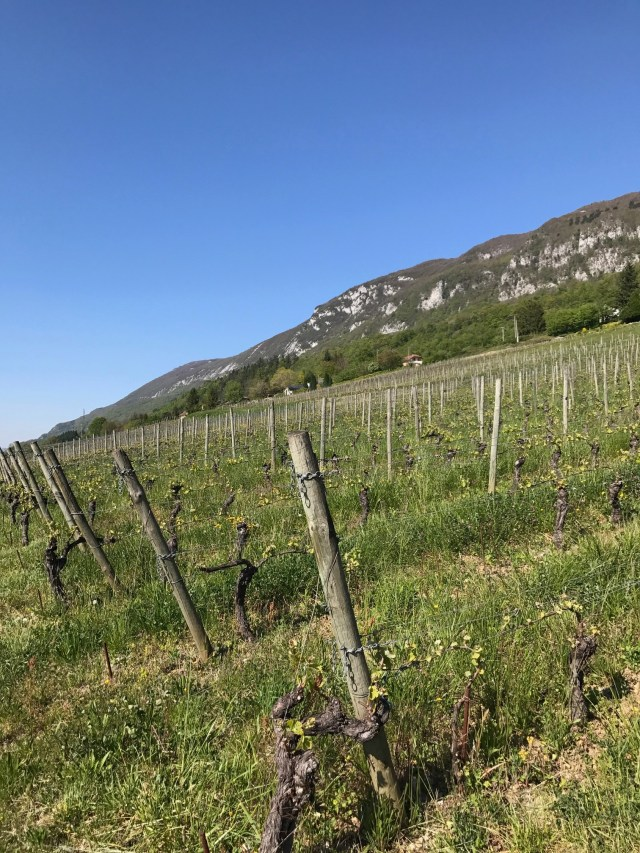Introducing Domaine Curtet: Savoie From the Sky