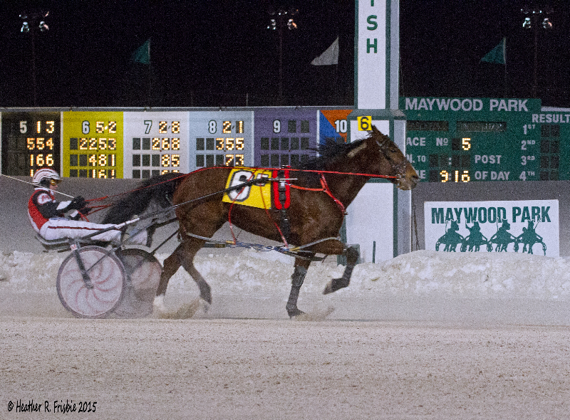 Dave Magee completes his final drive at Maywood Park with Blazing Fury in the 5th race.  Magee and Blazing Fury finished 7th.