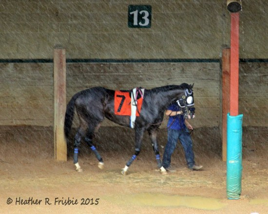 Kato Miss waits for her race in the saddling enclosure as heavy rains delayed racing for 20 minutes on Sunday.