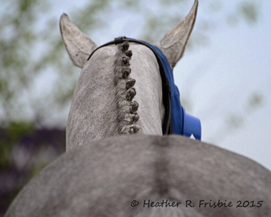 Another braid job.  This guy DID take a win photo - Tens Wild.