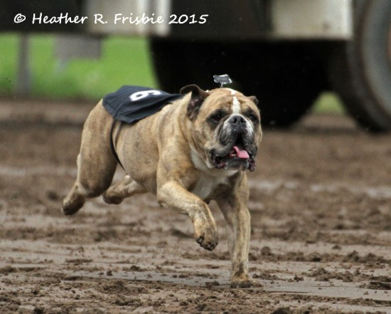 The track may have been sloppy, but this guy is just skimming over it!