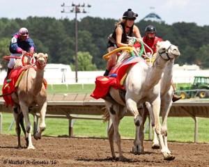 Michelle Benson dominates the camel race.