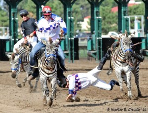 Chris Rosier was just fine after his bucking zebra finally got his way halfway through the race.