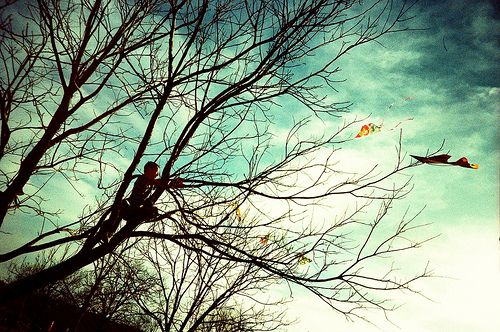 Image result for kite in a tree