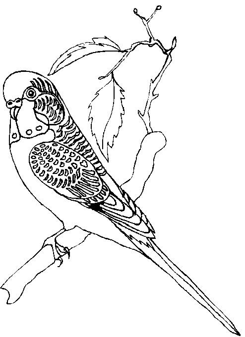 back to coloring pages parrots category