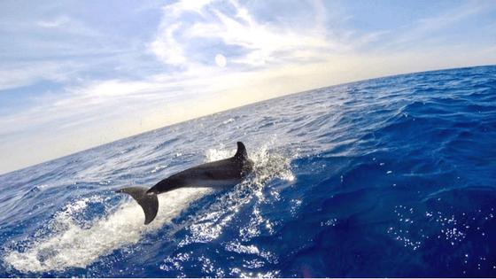 Observation des cétacés - Label qualité Whale Watching