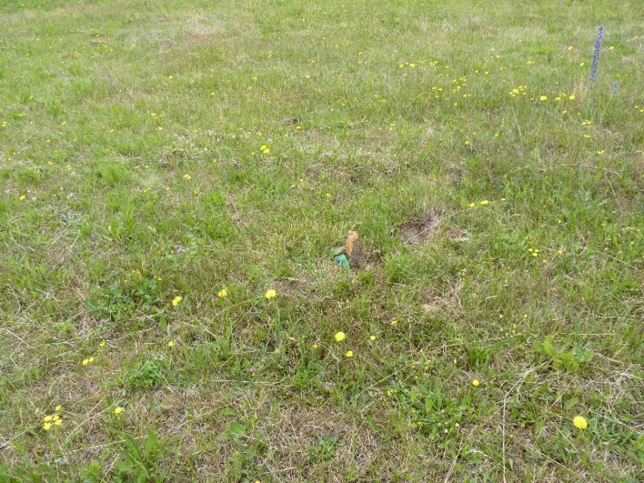 Gras im Juni (9)