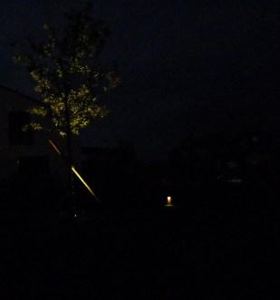 ... wie auch der Pflaumenbaum