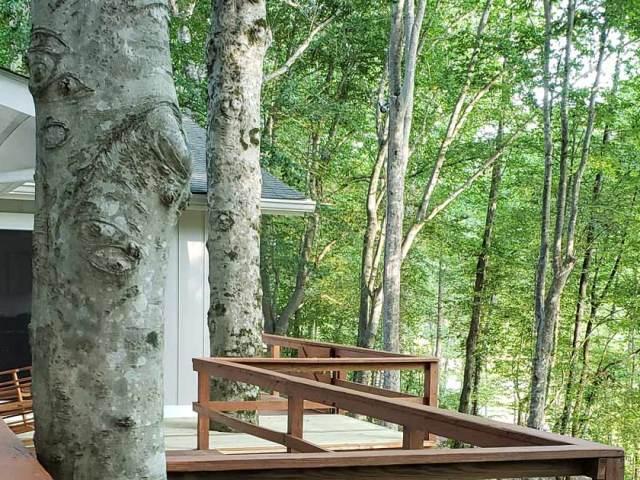 Deck Railing and Tree
