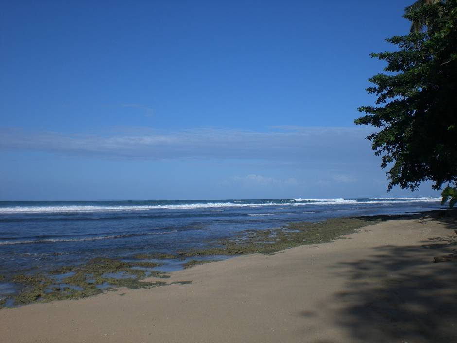 Sand, coral reef and forest in one of the best beaches in Costa Rica