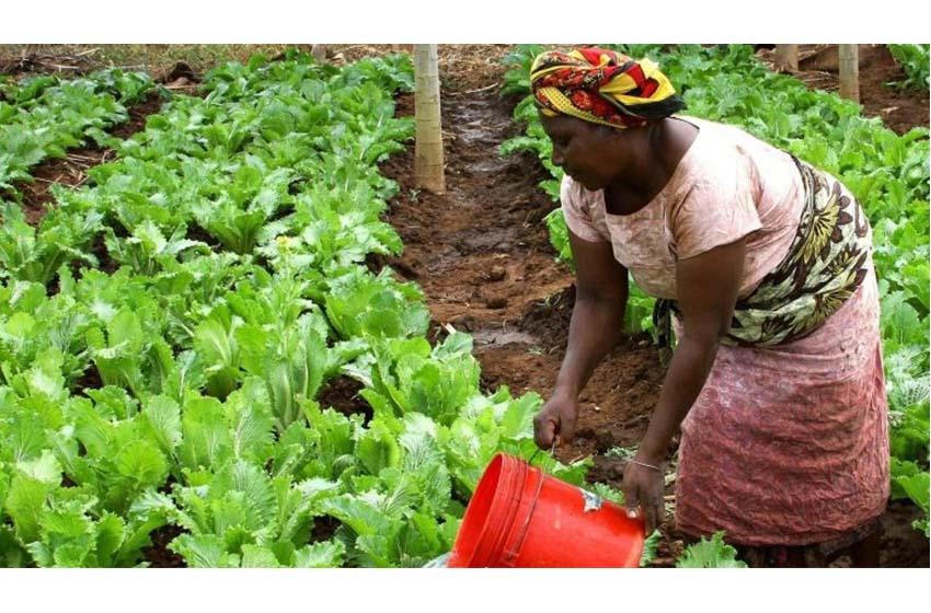 GIZ/50 000 € pour soutenir les startups agricoles en Afrique