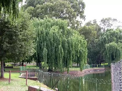 Alberton Dam A Place To Relax