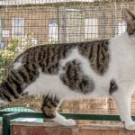 Alberton SPCA Loving Homes Needed