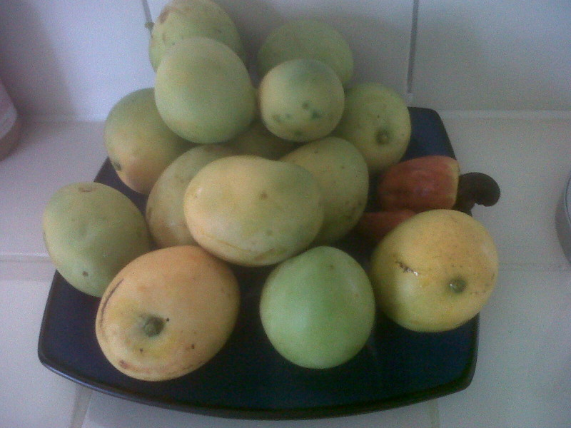 mangoes and cherrynuts from trees in Anguilla