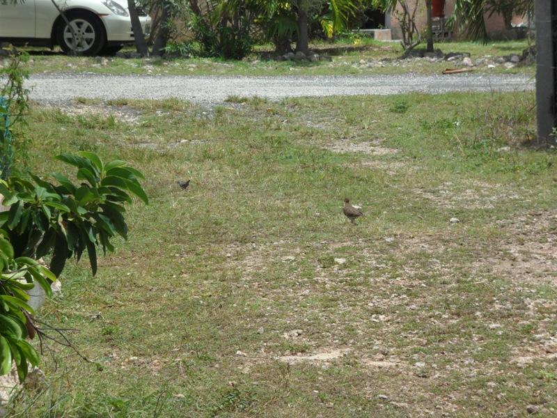 Leaving so soon? Anguilla