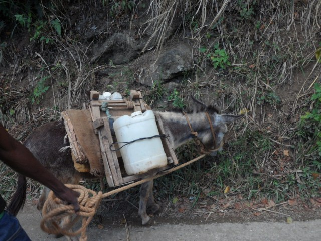 Donkey carrying water in Minto, Jamaica