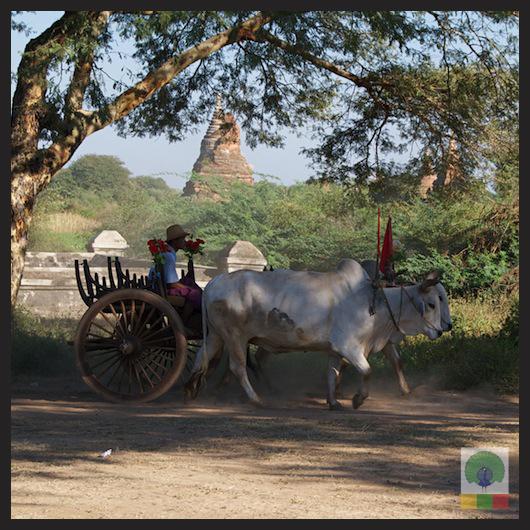 Bagan Temples - Myanmar (Burma) 3