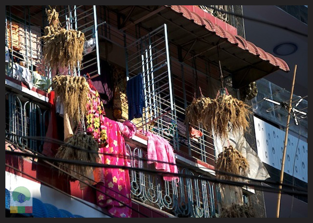 Wheat bunch for birds in Myanmar Streets_3