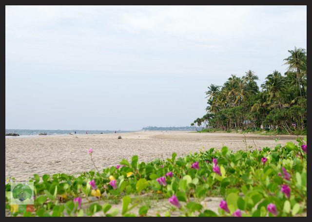 Ngwe Saung Beach - Myanmar (Burma) 3