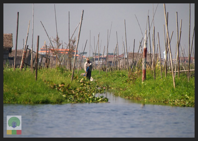 Floating Gardens Inle Lake - Myanmar (Burma) 4