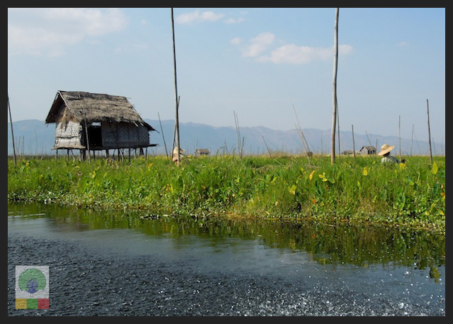 Floating Gardens Inle Lake - Myanmar (Burma) 7