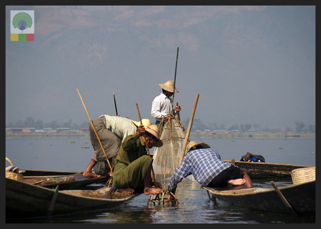 One leg paddling fisherman - Inle Lake - Myanmar (Burma) 10