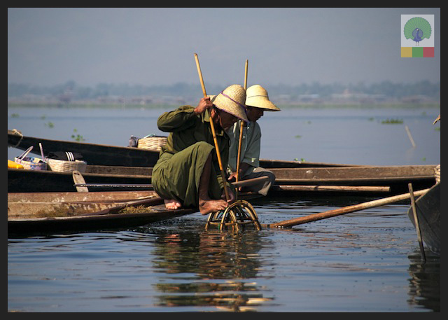 One leg paddling fisherman - Inle Lake - Myanmar (Burma) 11