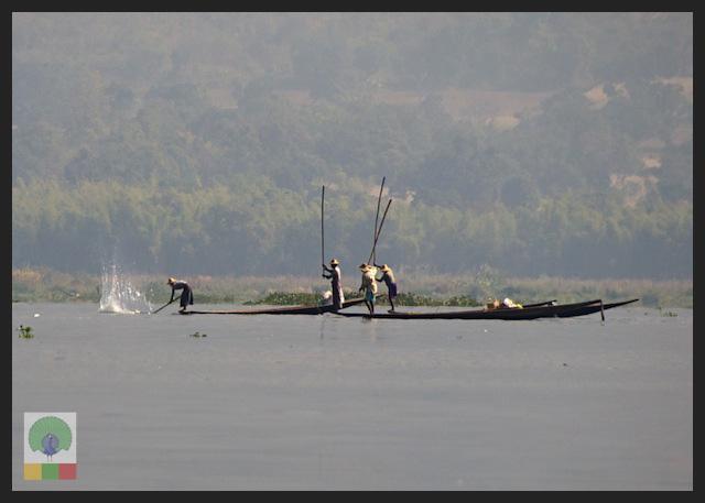 One leg paddling fisherman - Inle Lake - Myanmar (Burma) 6