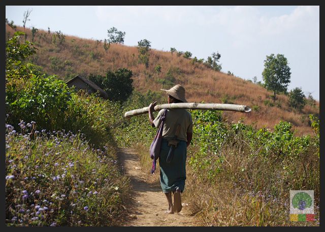 Man carrying Bamboo - Inle Lake - Myanmar (Burma)