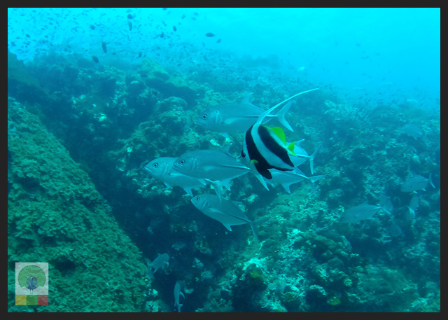 Diving-in-Ngapali-beach-Myanmar-Travel-Essentials-12