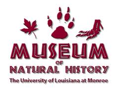 ulm museum_1490741235558.png