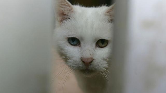 cats_1556611704108.jpg