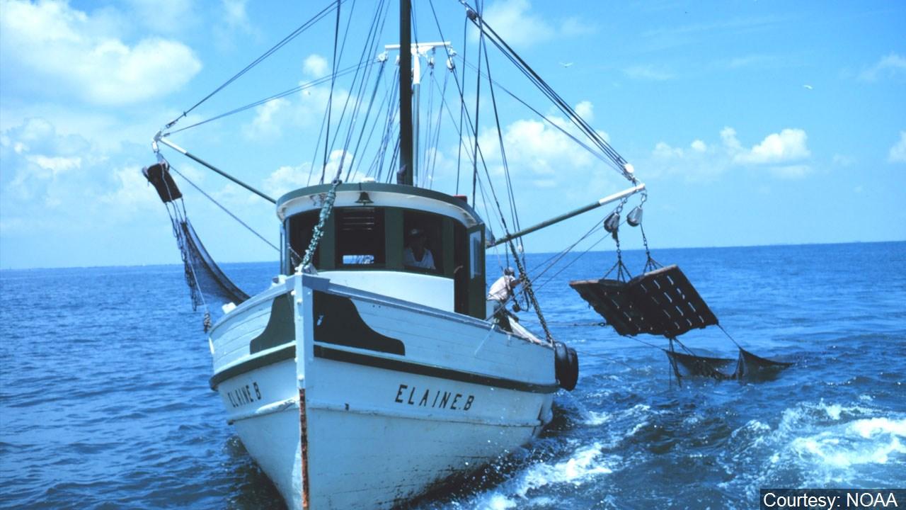 Louisiana's shrimp season starts Monday: 3 zones, 2 times | KTVE