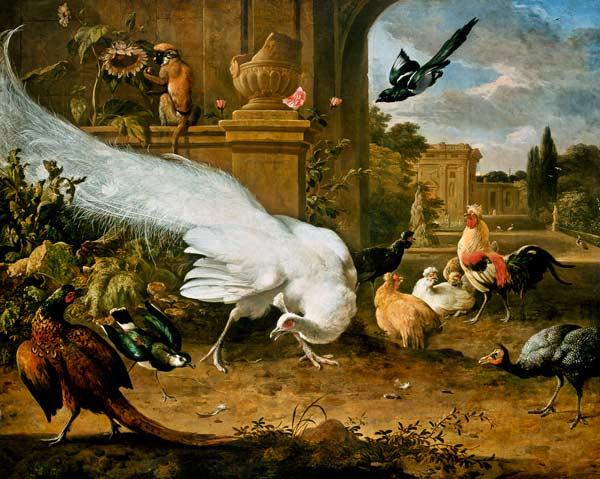 The White Peacock Melchior De Hondecoeter As Art Print