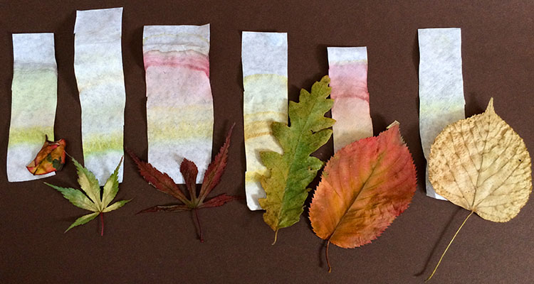 Image result for leaf chromatography