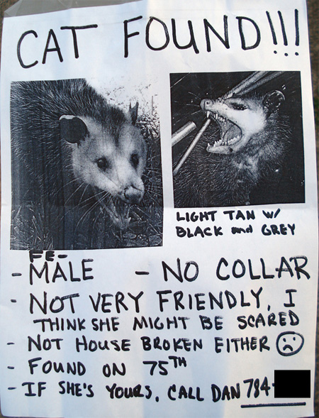 cat found poster shows one mean kitty