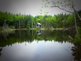Pond on Mt. Greylock