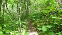 Runnable trail! Yay!