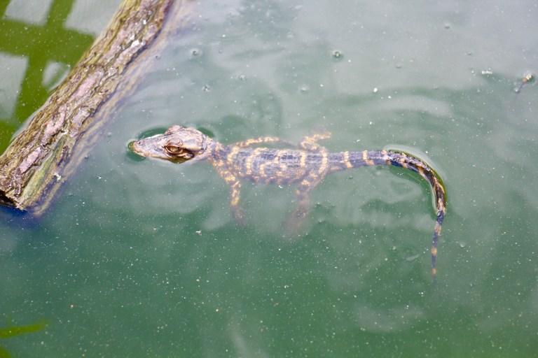 Everglades 3