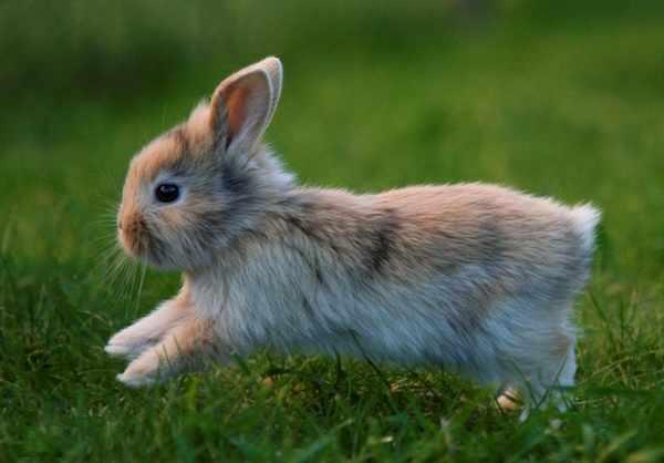Charming-Rabbits13