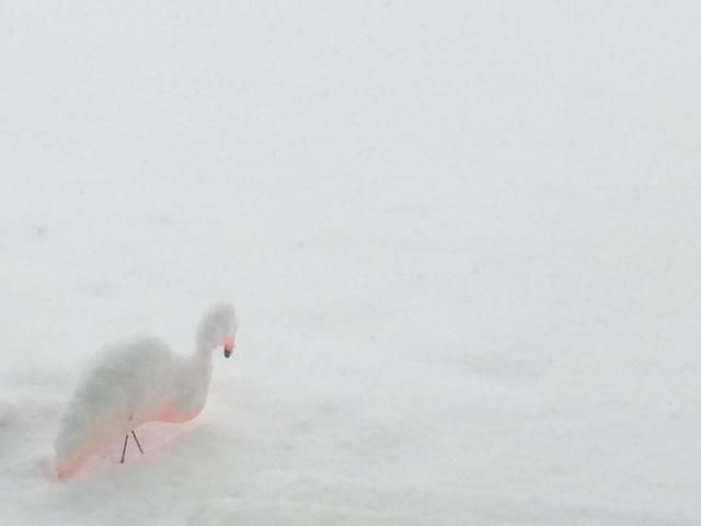 Arctic Sharknado and Blizzard-zilla!