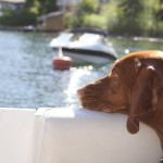Tips and Gear for Boating with Dogs