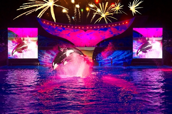 2014 Shamu show at SeaWorld