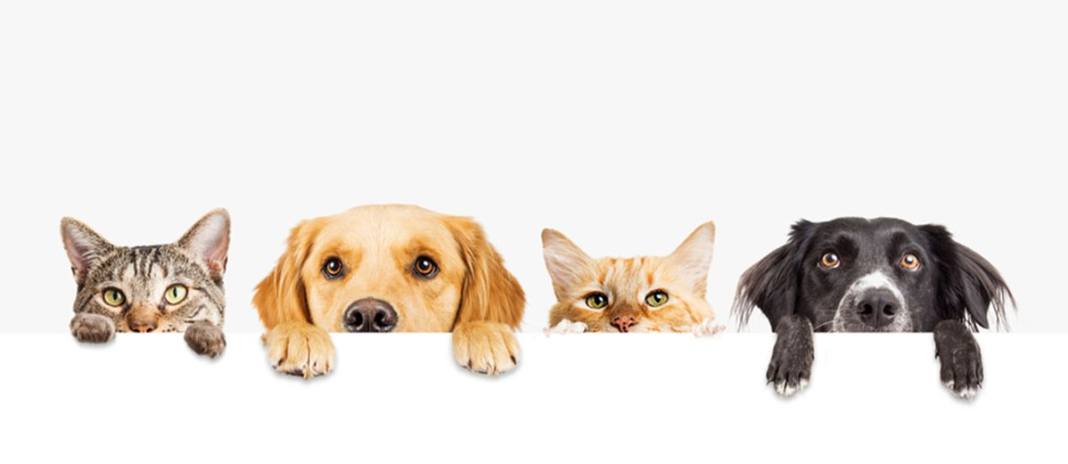 How to Make a Pet-Friendly Home   MyBoysen