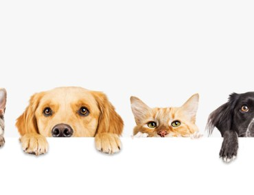 How to Make a Pet-Friendly Home | MyBoysen